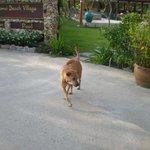 resort dog