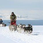 Dog sledding - Winter/Spring - Photo: Tommy Simonsen