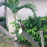 un oiseau :-) attention il mange dans votre assiette !!