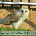 Visit our Birds of Prey Aviary