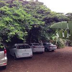 Parking under the passion fruit tree.