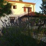 House - garden side