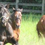 running in pasture