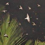 Incoming swallows