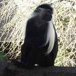 The Diani Reef monkeys!!