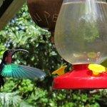 le ballet des colibris