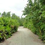 le strade dell'isola