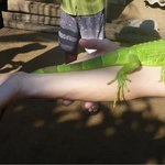 Playing with Iguana's