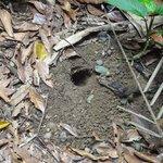 Allí se esconden los cangrejos. Hacen un agujero de más de un metro y van llevando agua.
