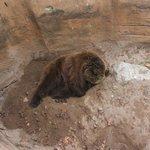 L'orso Dormiente