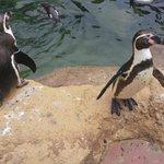 Pinguini Giocosi