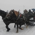Slitta trainata dai cavalli
