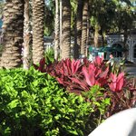 Paradise Island - Resort Site
