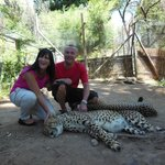 The sleepy cheetahs