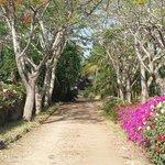 Viale di Shambani