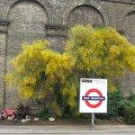 Ближайшая станция метро West Brompton