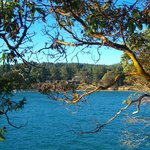 Bennet Bay, arbutus tree, and the resort