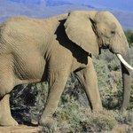 Make way for elephants