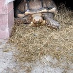 Even turtles have a home here...