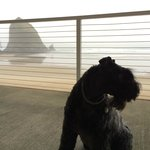 Kerry Blue Terrier friendly hotel