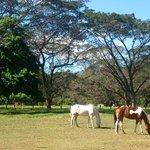 Saturday morning at Painted Pony
