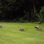 aves passeando em frente aos aptos
