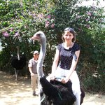 Я катаюсь на страусе в парке на водопаде Пренн