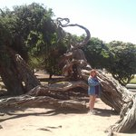 Cool tree in the park