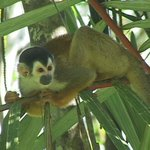 Squirrel Monkeys are very easy to film