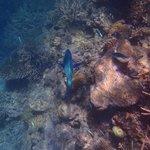 Knuckle Reef