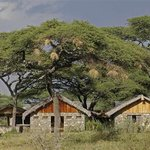 Ndutu Safari Lodge Foto
