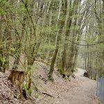 Il parco d'inverno, la natura riposa sotto le foglie morte