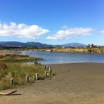 One for the bird lovers - The Waikanae Estuary Scenic Reserve