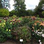 Teil einer schön gestalteten Gartenanlage