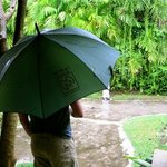 Two umbrellas supplied per room