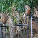 Monkeys on grounds - keep room windows closed!