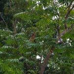 Common Eagle