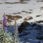 hummingbird by the sea