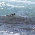 sea otter enjoying lunch