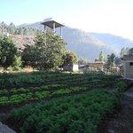 Vegetable garden in the grounds