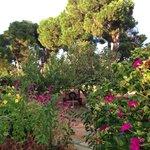 Sunsets glorious garden!