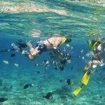 snorkeling @money bar