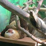 Sloth lying around
