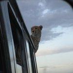 Cheetah our back spare wheels