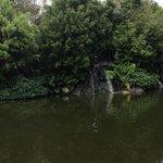 Lagoon by the Loca Vore