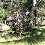 A hotel's tree