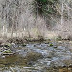 Trout Stream in Potter County