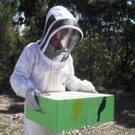 adding a box for more honey