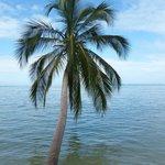 Palme am Wasser