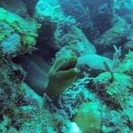 Morey Eel, Aquarium dive site, Long Caye